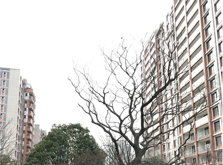 金陵雅颂居实景图(3.20)