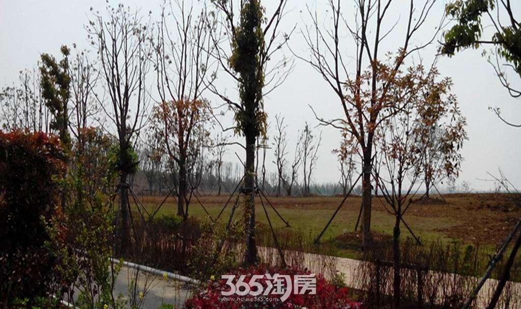 紫云赋江山印周边配套公园环境实景图(8.16)