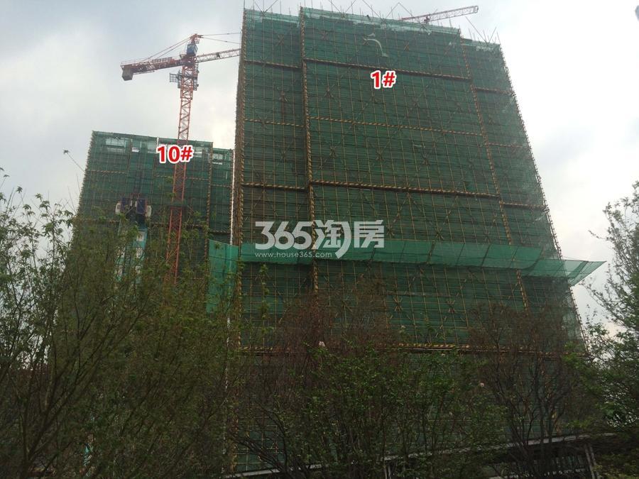 融信保利创世纪1、10号楼施工实景图 2017年8月摄